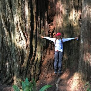 Giant Redwoods, Jedediah Smith State Park